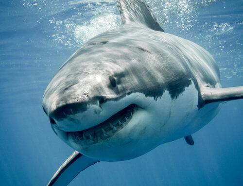 What are SHARK TEETH and should I be worried?
